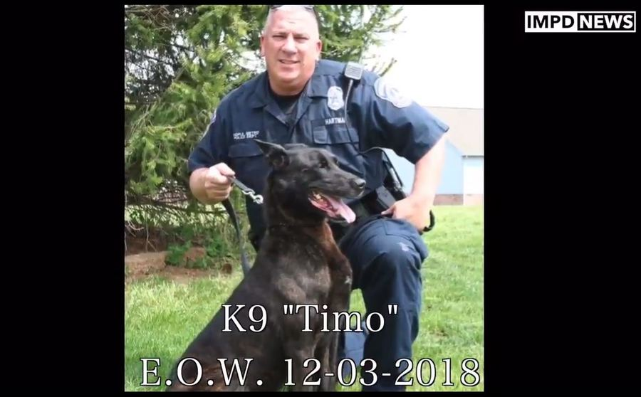 Timo Indianapolis Police Dog Dies Of Cancer At Age 12