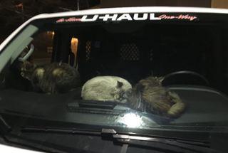 43 cats found in U-Haul truck in Muncie